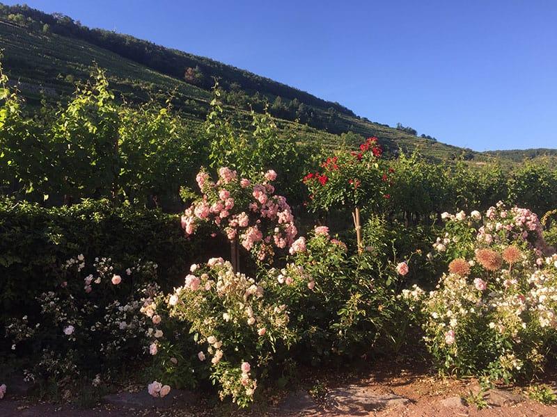 garden kaysersberg