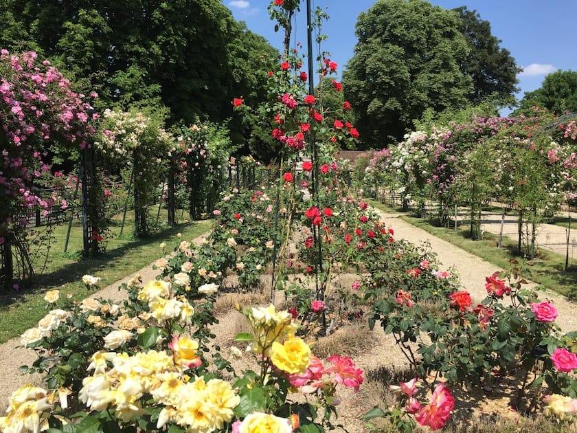 val du marne rose garden