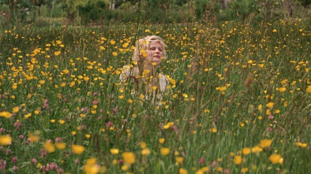 marie antoinette wild flowers
